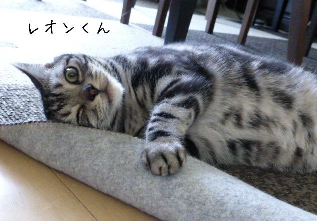 お留守番にゃんこギャラリー【June】_e0237625_16365782.jpg