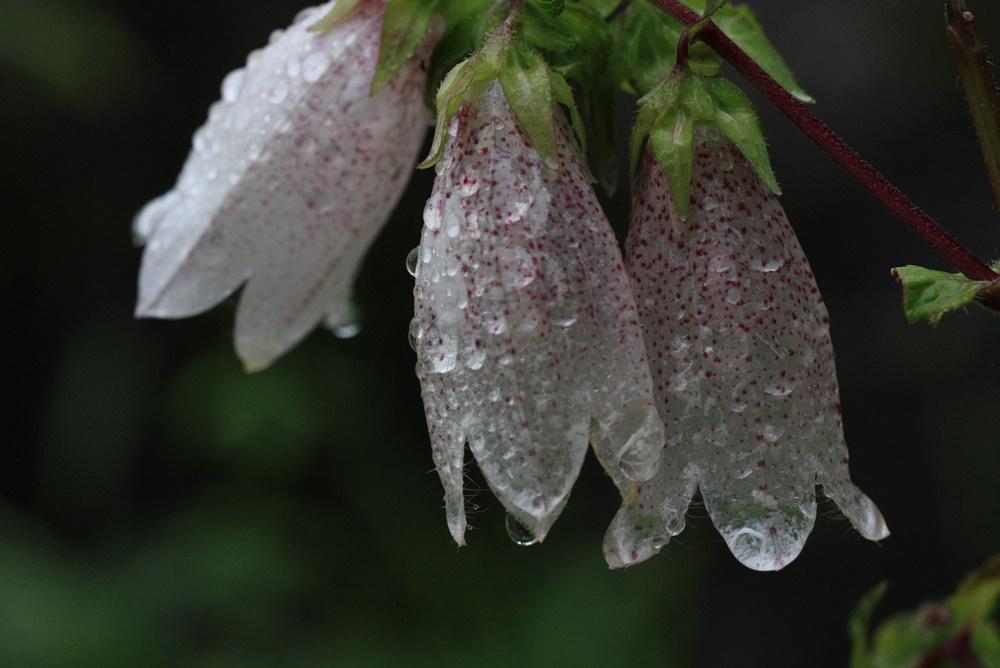 雨降りの一日_c0111229_18484964.jpg