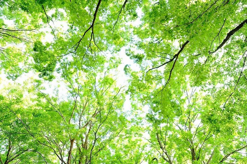 7月9日清澄公園 B&Wフォト企画ワークショップ_f0050534_09010832.jpg