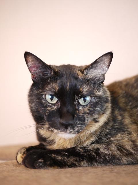 猫のお留守番 ワサビちゃん天ちゃん麦くん茶くん編。_a0143140_2122068.jpg