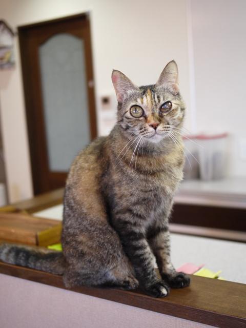 猫のお留守番 ワサビちゃん天ちゃん麦くん茶くん編。_a0143140_21222754.jpg