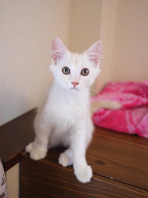 猫のお留守番 ワサビちゃん天ちゃん麦くん茶くん編。_a0143140_21231358.jpg
