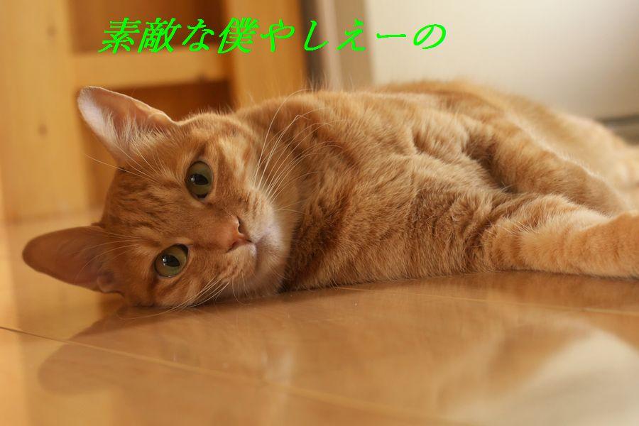 b0061787_1494110.jpg