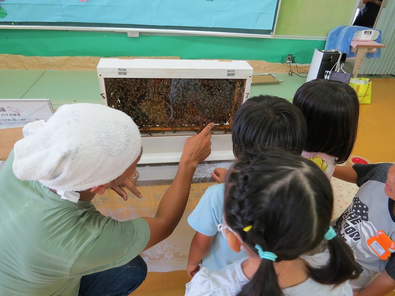 2016 幼稚園で採蜜体験_a0247891_10571467.jpg