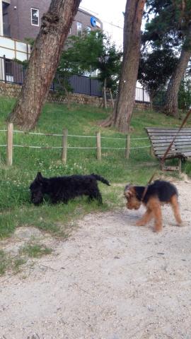 老犬と幼犬_e0055098_22545476.jpg