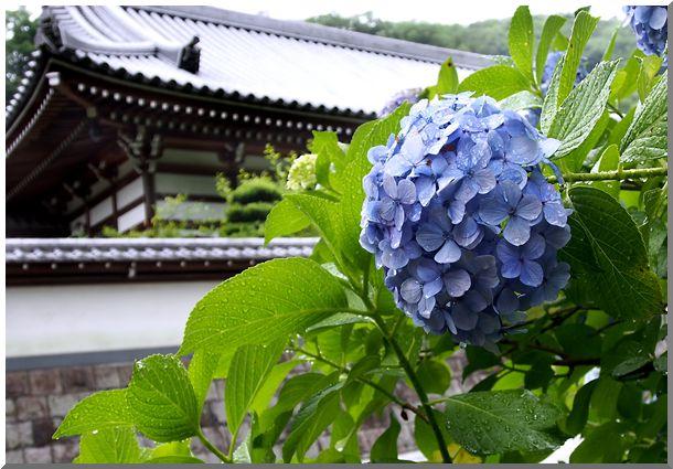 北鎌倉(円覚寺・他)_d0123528_18165242.jpg