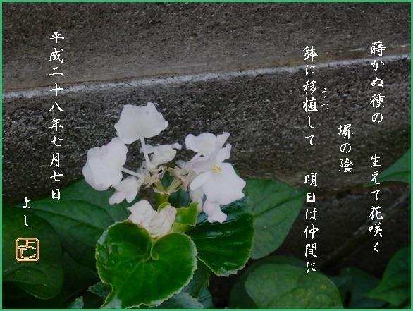 e0033229_1991812.jpg