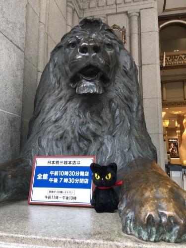 のら猫クロッチと目があって3 ★ 大西和子さん_f0193056_15375145.jpg