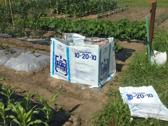寒冷地でのオクラの露地栽培_a0356060_15091042.jpg