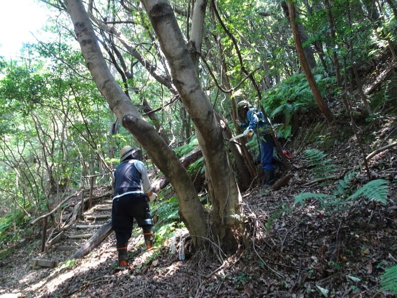 うみべの森にもカブトムシはいた_c0108460_17241749.jpg