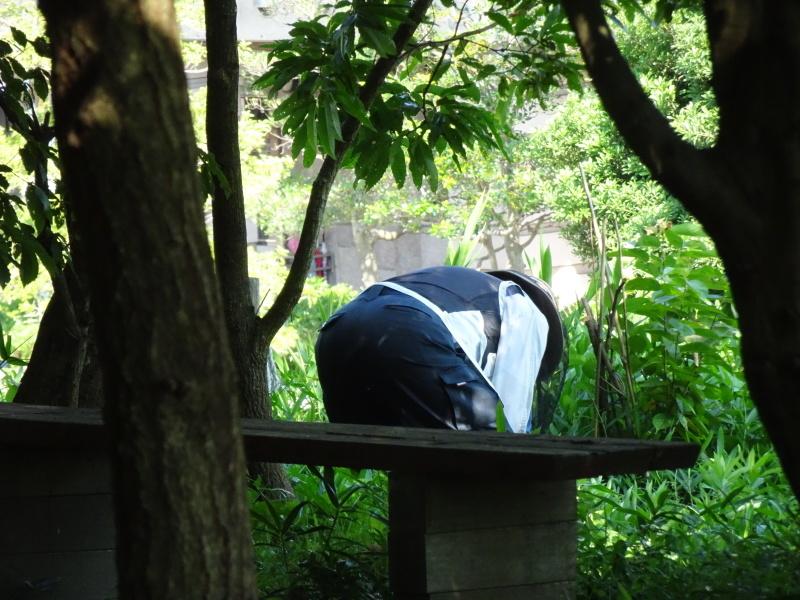 うみべの森にもカブトムシはいた_c0108460_17255354.jpg