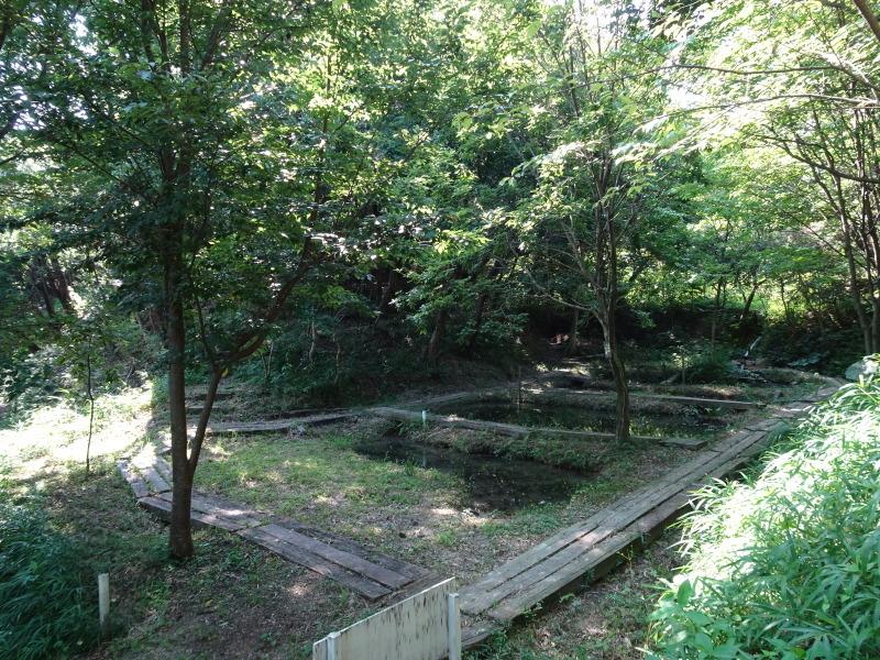 うみべの森にもカブトムシはいた_c0108460_17255720.jpg