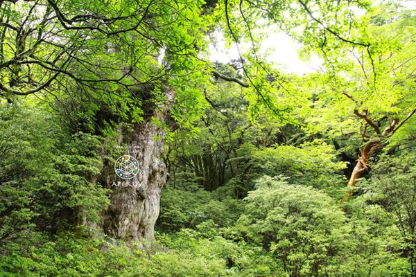 晴れてる雨の森_f0252883_14380762.jpg