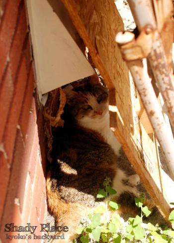 日陰で意地を張る猫?_b0253205_05063374.jpg