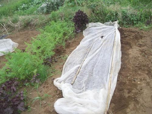 雨の前に...種まきです。_b0137932_21191566.jpg