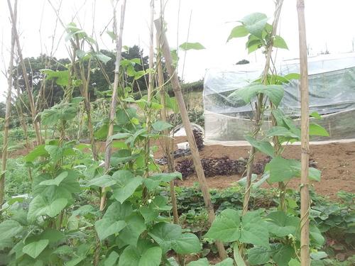 雨の前に...種まきです。_b0137932_21221331.jpg