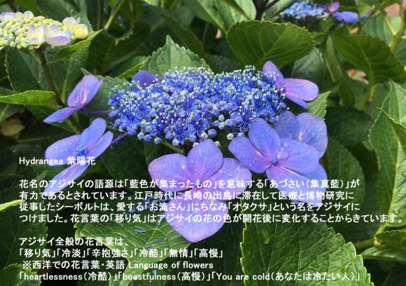 a0346455_19414672.jpg