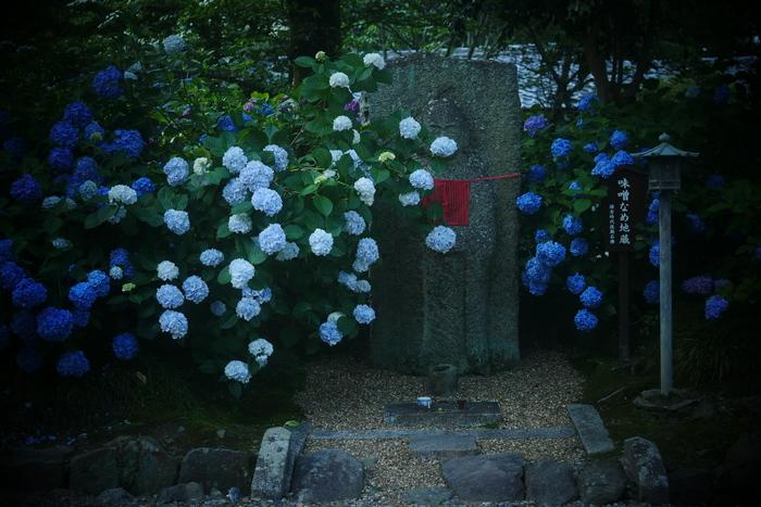 紫陽花 2016 矢田寺_f0021869_23152359.jpg