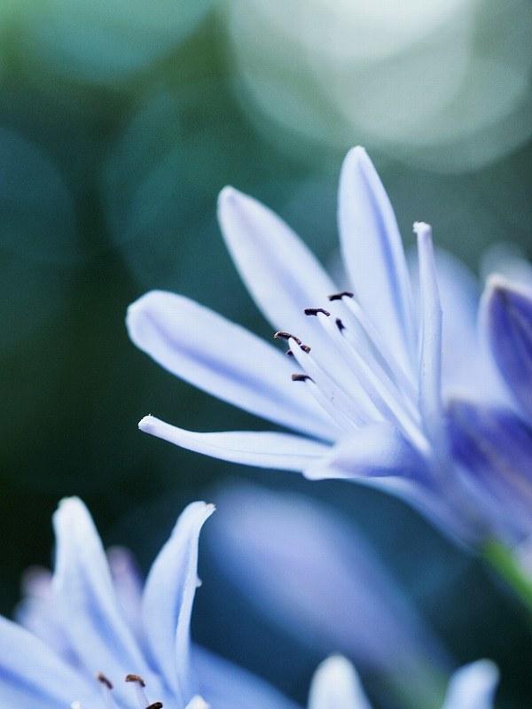 花いろいろと_a0330871_21354186.jpg