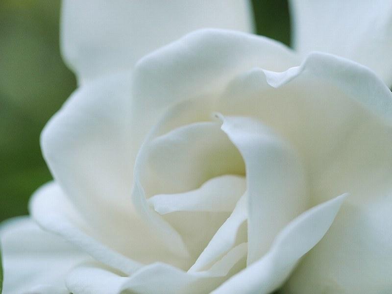 花いろいろと_a0330871_21354237.jpg