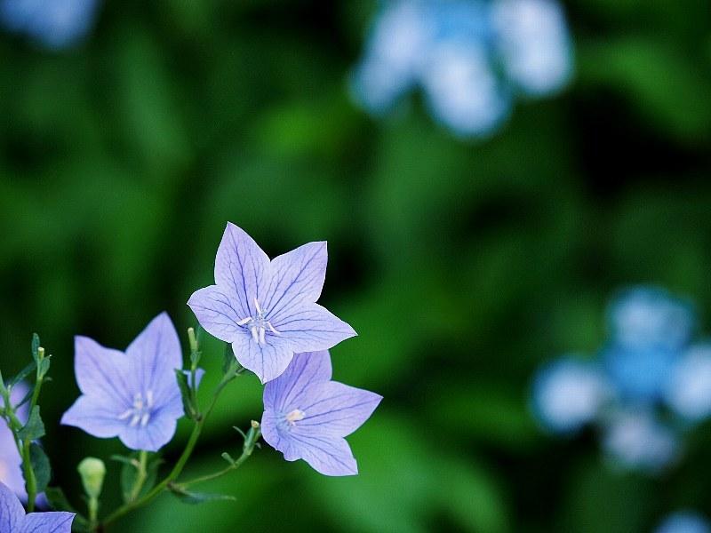 花いろいろと_a0330871_21365226.jpg