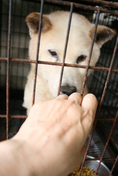 ブリーダー放棄の柴犬とラブたち(7/2-7/3)_f0242002_2133946.jpg