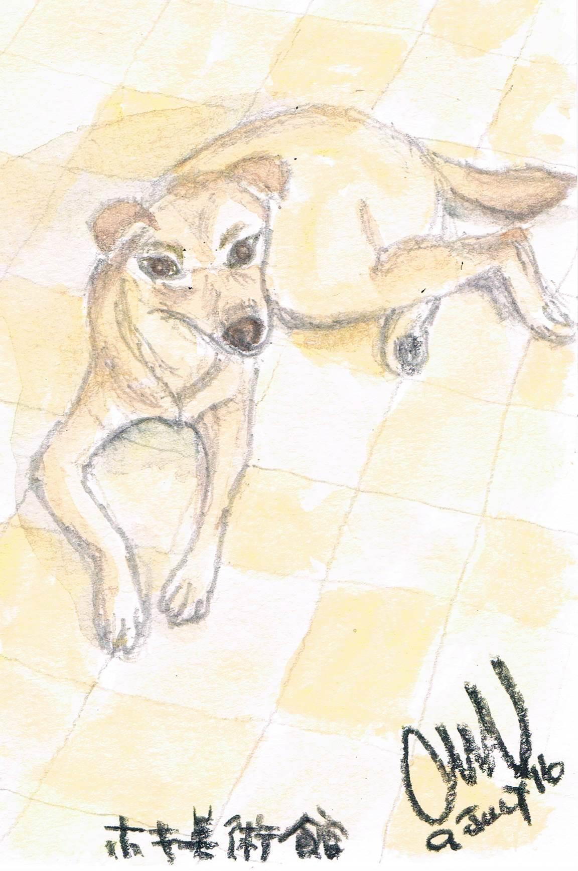 白い犬_e0232277_15593297.jpg