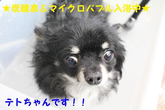 ちびまる君GET!!_b0130018_2340077.jpg