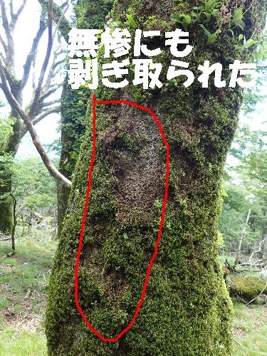 f0193521_1659201.jpg
