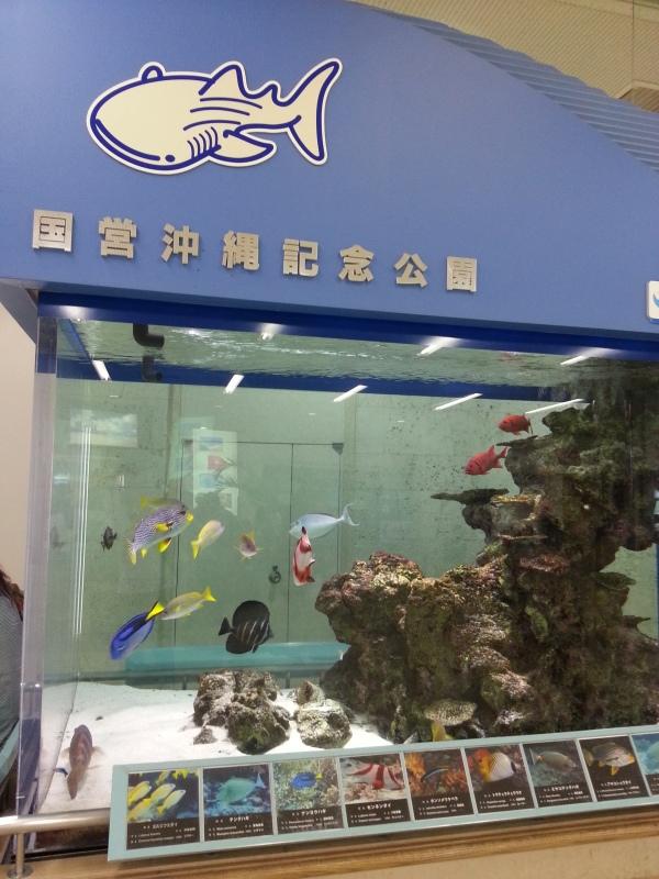 イン沖縄_c0357333_18331299.jpg