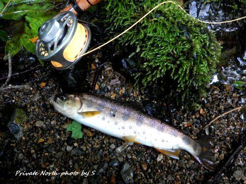 本日の釣りと昨日の釣り_d0261148_13115596.jpg