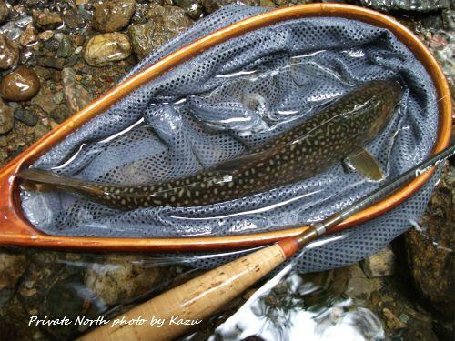 本日の釣りと昨日の釣り_d0261148_18305725.jpg