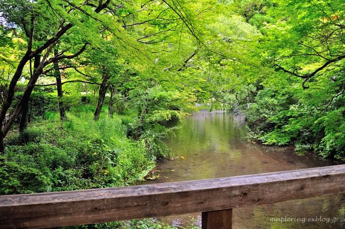 湯布院/散策からのランチは山椒郎_f0234062_22284838.jpg