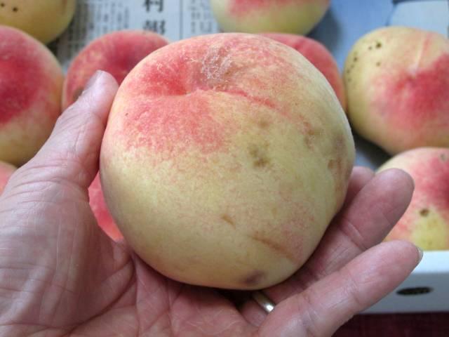 桃の季節がやってきた(嬉)_d0036883_14375987.jpg
