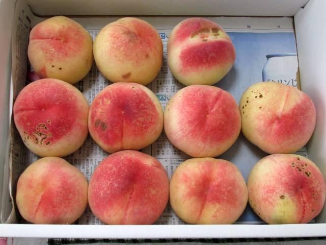 桃の季節がやってきた(嬉)_d0036883_14375988.jpg