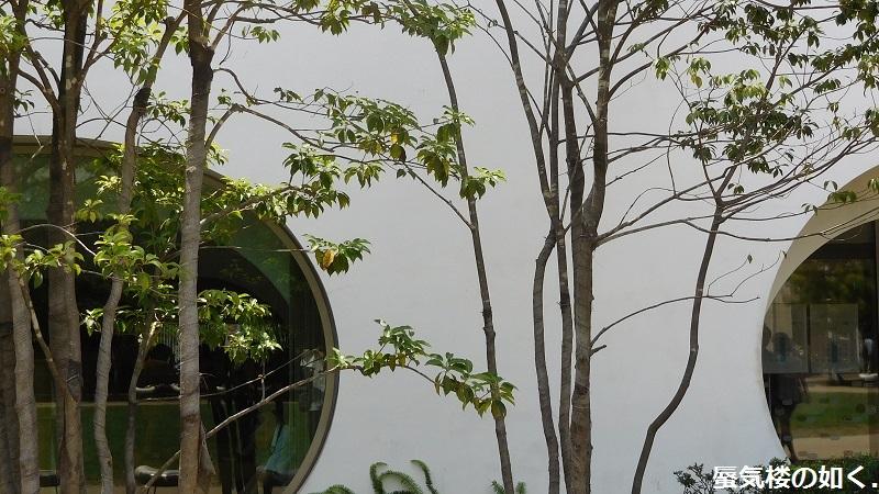 「甘々と稲妻」舞台探訪001 主要舞台は武蔵境、これからの展開が楽しみ(第01話)_e0304702_21410334.jpg