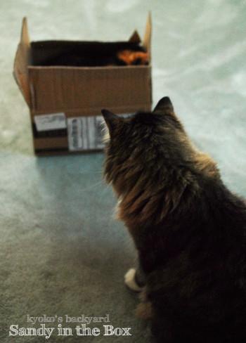 箱の中の姉猫を見た、弟猫の反応_b0253205_08200329.jpg