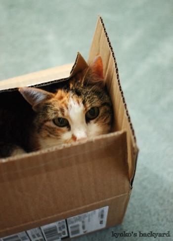 箱の中の姉猫を見た、弟猫の反応_b0253205_08201560.jpg
