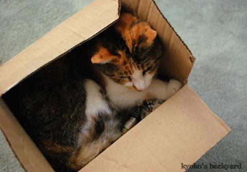 箱の中の姉猫を見た、弟猫の反応_b0253205_08202654.jpg