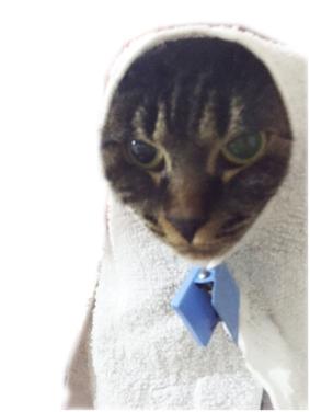 世界から猫が消えたなら_f0030429_10465054.jpg