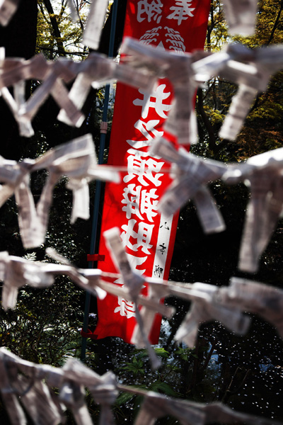 今さら、桜の写真_b0175635_9341717.jpg