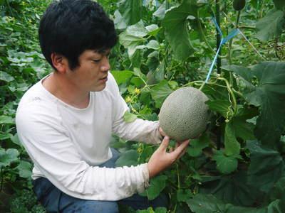 熊本産高級マスクメロン『肥後グリーン』令和元年は7月30日(火)が最終出荷!残りわずかお急ぎください!!_a0254656_2027137.jpg
