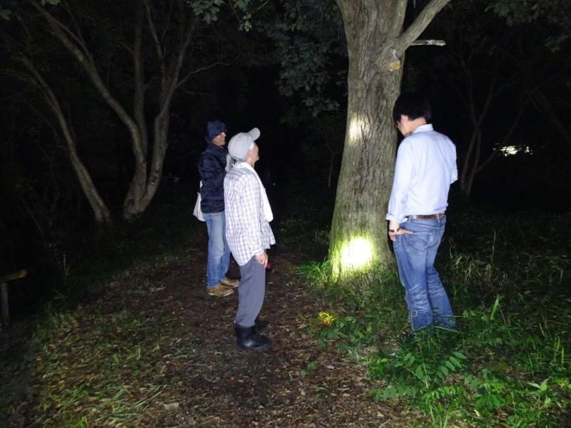 カブトムシ調査 in うみべの森_c0108460_00332930.jpg