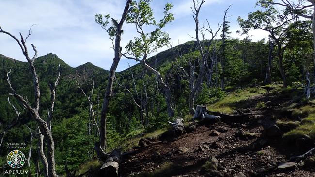 レシャップベルに向けて part3 八ヶ岳スリーピークス試走_f0252883_05584020.jpg