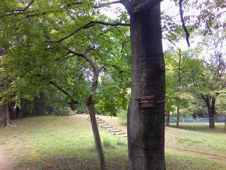 環境・かわまつり「清瀬の銘木を訪ねて」の事前探索に_b0255217_15100129.jpg