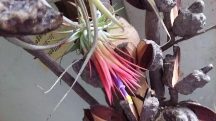 花は咲く!_b0288732_18510314.jpg