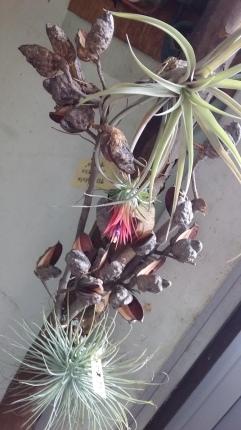 花は咲く!_b0288732_18512558.jpg