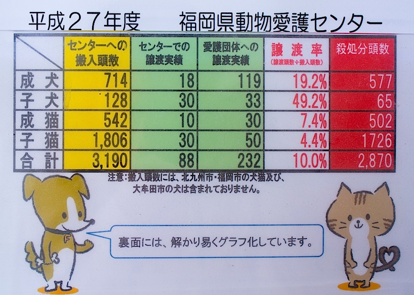子猫を警察へ持ち込んだら_d0073743_11173890.jpg
