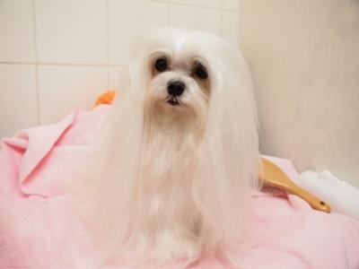 ピンクちゃんの長~い前髪…_b0001465_15202325.jpg