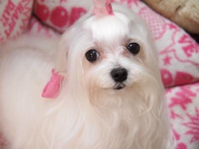 ピンクちゃんの長~い前髪…_b0001465_15284271.jpg